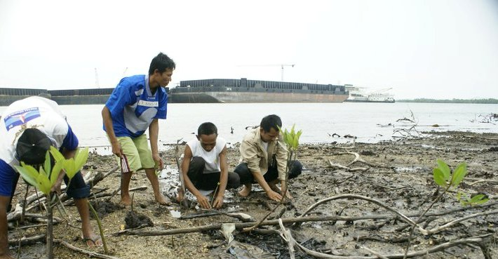 menanam bakau di tepi laut
