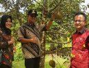 Durian Binta