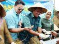 Panen Padi di Bintan bersama Bupati Bintan Apri Sujadi